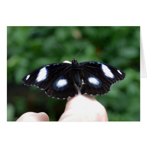 Tarjeta 5 de la mariposa