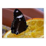 Tarjeta 6 de la mariposa