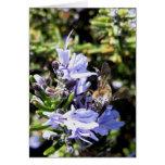 TARJETA - abeja de la miel en la flor