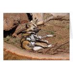 Tarjeta africana del perro salvaje 017