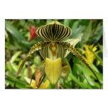 Tarjeta amarilla de la flor de la orquídea