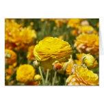 Tarjeta amarilla de la flor del ranúnculo