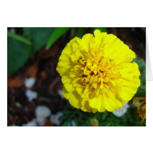 Tarjeta amarilla de la maravilla