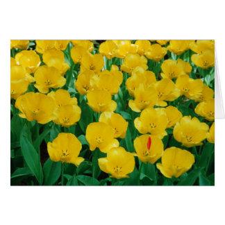 Tarjeta amarilla de los tulipanes