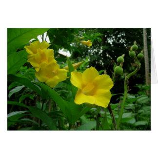 Tarjeta amarilla del Allamanda (trompeta de oro)