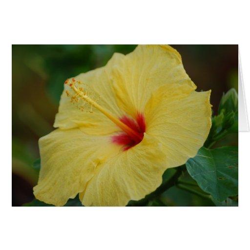 Tarjeta amarilla del hibisco