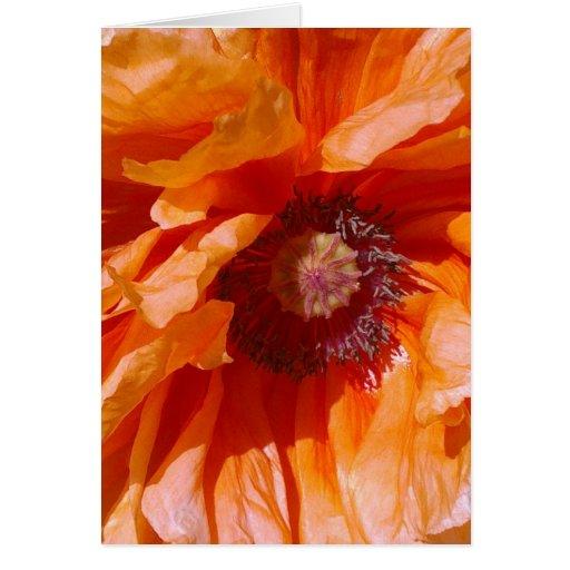 Tarjeta anaranjada de la amapola