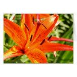 Tarjeta anaranjada de la flor del lirio I