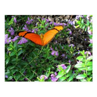Tarjeta anaranjada de la mariposa de Julia Postal