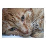 Tarjeta anaranjada del gato