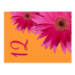 Tarjeta anaranjada y rosada del número de la tabla tarjetas postales