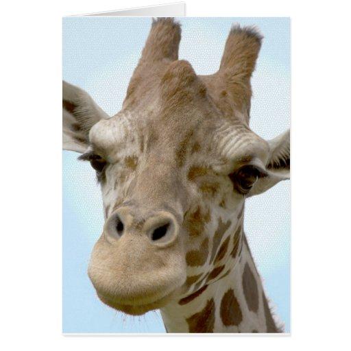 Tarjeta apacible de la jirafa