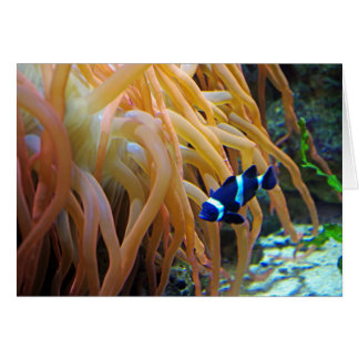 Tarjeta azul de Clownfish
