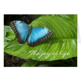Tarjeta azul de la mariposa de Morpho