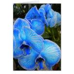 Tarjeta azul de la orquídea de la mística (espacio