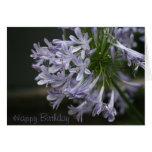 Tarjeta azul del Agapanthus del feliz cumpleaños d