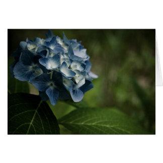 Tarjeta azul del Hydrangea 8519