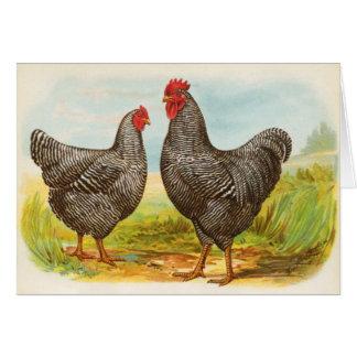 Tarjeta barrada vintage de los pollos de Plymouth