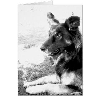 Tarjeta belga feliz del perro de pastor del día de