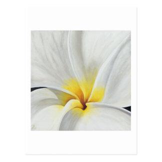 Tarjeta blanca del arte del Frangipani Tarjeta Postal