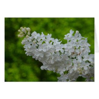 Tarjeta blanca del flor de la lila