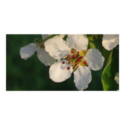Tarjeta blanca del flor de la pera plantilla para tarjeta de foto