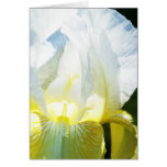 Tarjeta blanca del iris amarillo