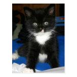 Tarjeta borrosa del gatito postal