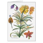 Tarjeta botánica de 52 flores