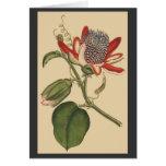 Tarjeta botánica de las flores del vintage