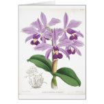 Tarjeta botánica de las orquídeas del vintage