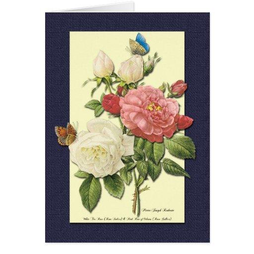 Tarjeta botánica del arte de los rosas blancos y r