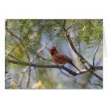 Tarjeta cardinal