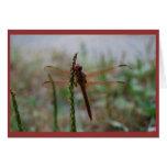 Tarjeta cardinal de la libélula de Meadowhawk
