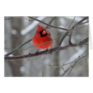 Tarjeta cardinal roja de la perca (vista delantera