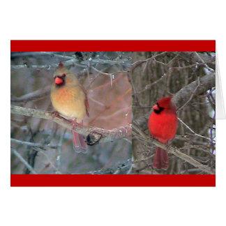 Tarjeta cardinal roja de los pares