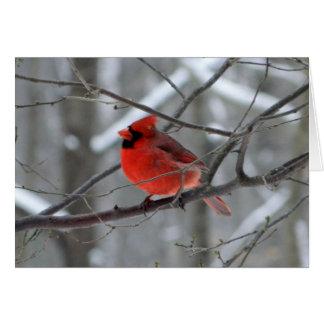 Tarjeta cardinal roja de WestCreek (espacio en bla
