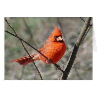Tarjeta cardinal septentrional