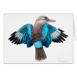 Tarjeta coa alas azul de Kookaburra