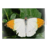 Tarjeta coa alas blanco inclinada naranja de la ma