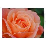 Tarjeta color de rosa anaranjada