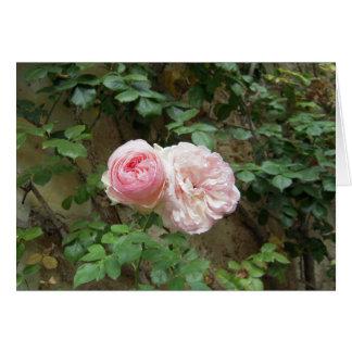 "Tarjeta color de rosa de ""Pierre de Ronsard"""
