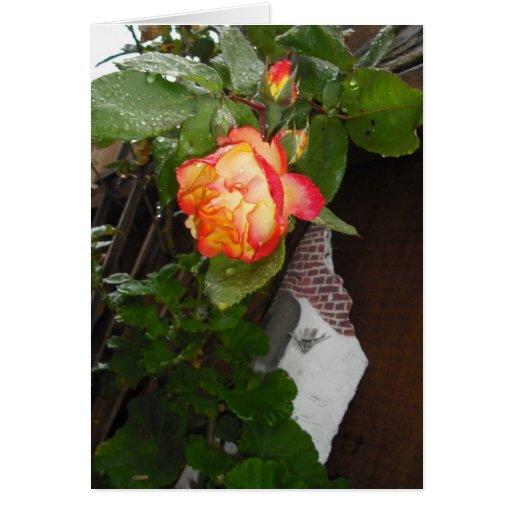 Tarjeta color de rosa en blanco