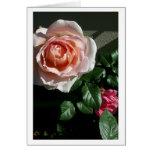 Tarjeta color de rosa en blanco #2