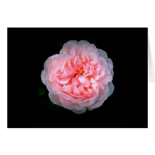 Tarjeta color de rosa rosada