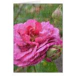 Tarjeta color de rosa y color de rosa de los brote