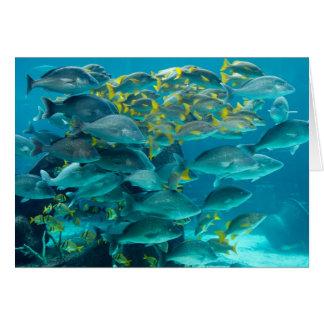 Tarjeta colorida de los pescados de la natación