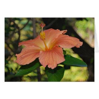 Tarjeta coralina del hibisco