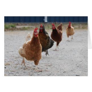 Tarjeta corriente de las gallinas