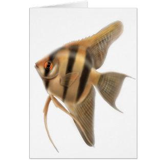 Tarjeta de agua dulce del Angelfish